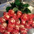 bukiet pięknych roz