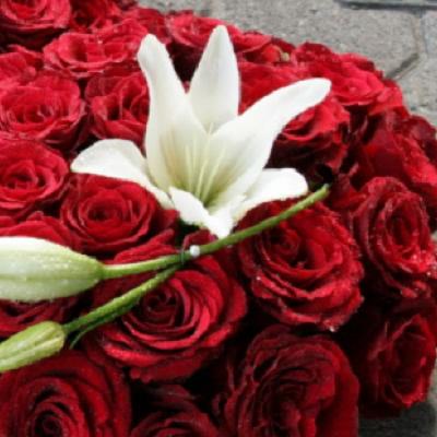 wieniec pogrzebowy 18 czerwone roze