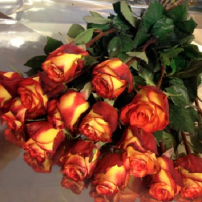 bukiet roz, bukiet z herbacianych roz
